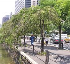 G&S Tree