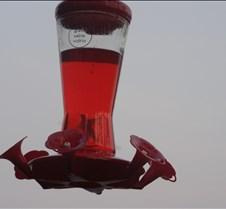 hummingbirdthrough3sign2
