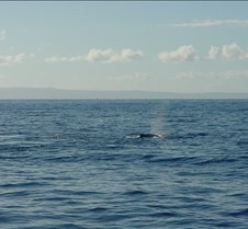 Whales-4