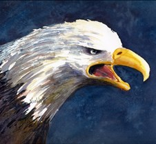 Bald Eagle - Signed