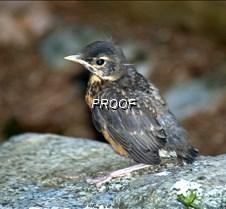 babybird2