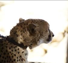 Wild Animal Park 03-09 018