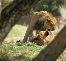 Wild Animal Park 03-09 146
