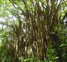 Hawaii 2010 276