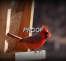 008  Cardinal