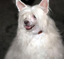 dogshow 16