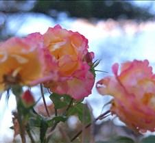 Flowers Scenics Flowers