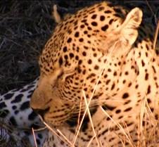 Ivory Lodge Safari Mupulanga0028