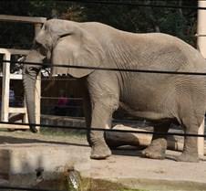 J Zoo 0611_110