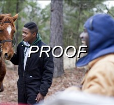 010313_horses