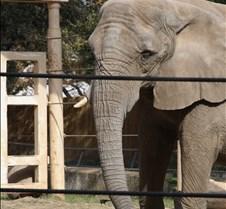 J Zoo 0611_115