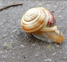 Snail with Stick
