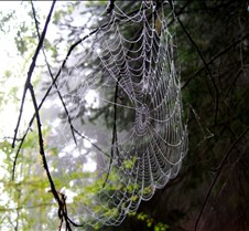 Orcas Spiderwebs