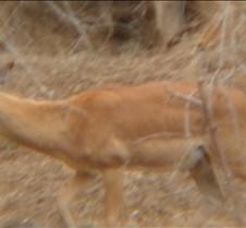 Ivory Lodge & Safari Pictures0161