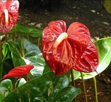Marriott_red_flower