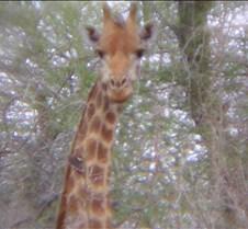 Ivory Lodge & Safari Pictures0116
