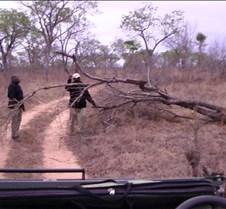 Ivory Lodge & Safari Pictures0043