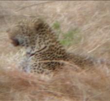 Ivory Lodge & Safari Pictures0035