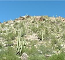 Tucson Sabino Canyon 5