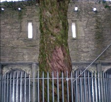 A Tree grows in the Castle