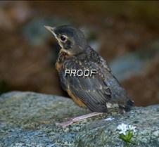 babybird4