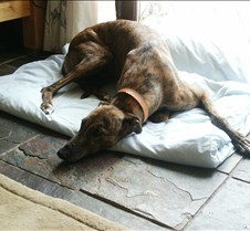 Thomas Happily homed in Barry with Paul and family not forgetting Scooby the greyhound.