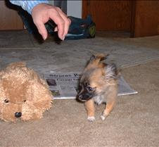 puppy picts 9-21-03 011