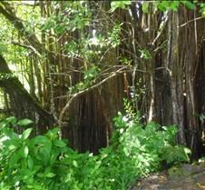 Hawaii 2010 262