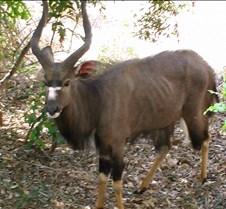 Ivory Lodge Safari Mupulanga0066