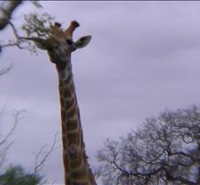 Ivory Lodge & Safari Pictures0120