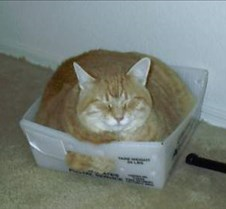 Fat cats love small boxes