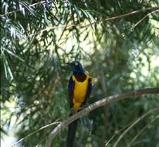 Wild Animal Park 03-09 008