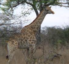 Ivory Lodge & Safari Pictures0085