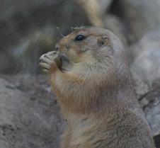 Wild Animal Park 03-09 070
