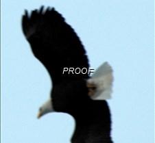 eagleflight-22