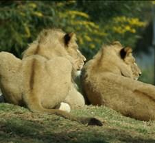 Wild Animal Park 03-09 184