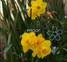 Photo taken on 03132020 @ 1539 - yellow