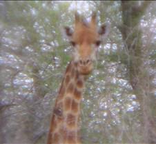 Ivory Lodge & Safari Pictures0117