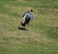 Wild Animal Park 03-09 121