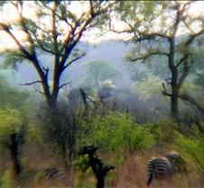 Elephant Ride0004
