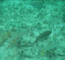 Cancun 2005 (27)