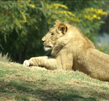Wild Animal Park 03-09 195