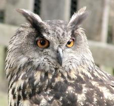 062802 OWL 51