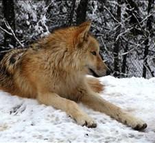 010204 Wolves Spirit 64