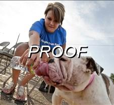 010113_DogPark01