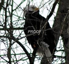 eagletree-1