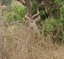 Ivory Lodge & Safari Pictures0145