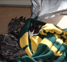 Crazy in the Packer Blanket 1