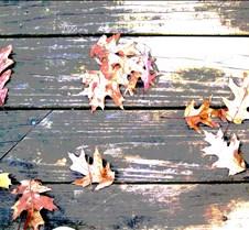 leavesonwoodposterize