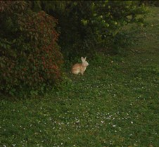 Rabit in the park